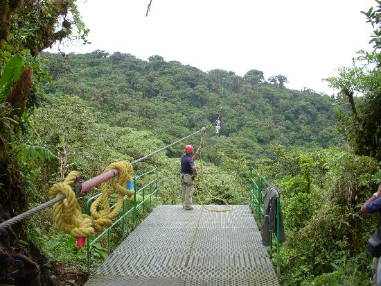 Up in the Cloud Forest : Base you jump off of