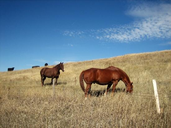 Wyoming: Horses on Rangeland with Cattle