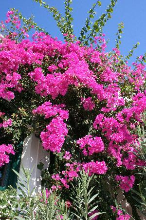 Imagen de Costa Marina Villas