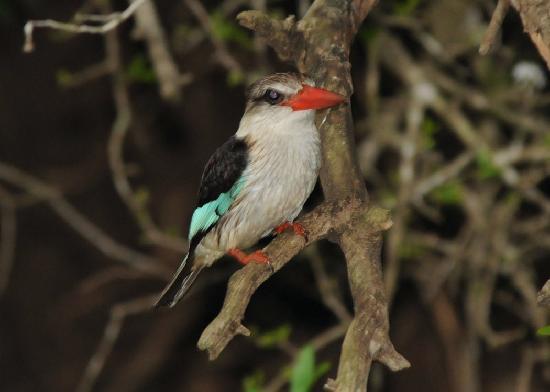 andBeyond Phinda Vlei Lodge : River cruise kingfisher