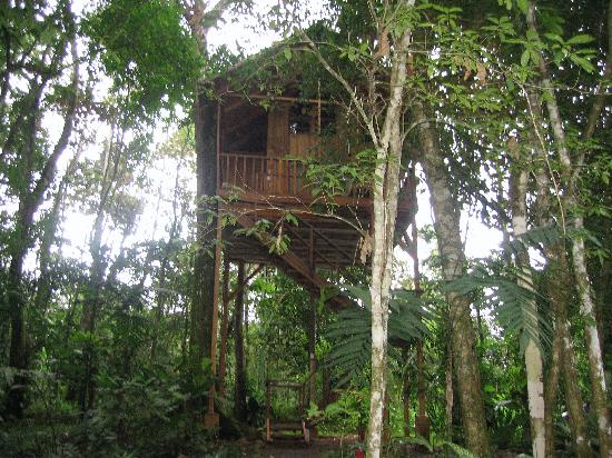 Julio picture of tree houses hotel costa rica la for Tree house for sale costa rica