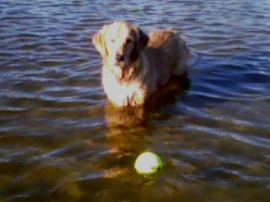 Dog Beach: She loves to play fetch in the water or on land!