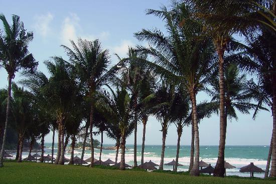 Club Med Bintan Island : Palm trees
