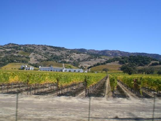 BEST WESTERN PLUS Inn at the Vines: Napa Valley vineyards