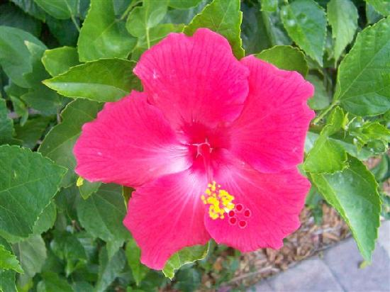 Casitas Coral Ridge: Some of the pretty flowers in bloom at the Estoril