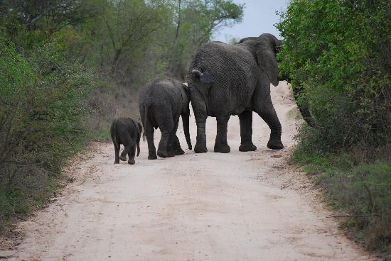 Dulini Lodge: Elephants!