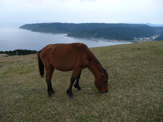 Kushima, اليابان: 絶景です