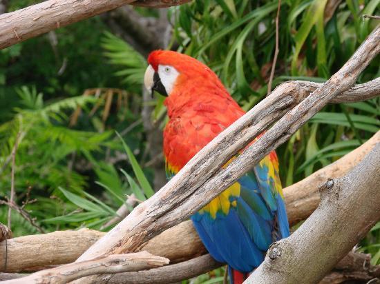 San Diego Bay Walk: Polly wants a cracker