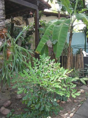 Pousada Casuarinas: area verde