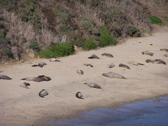 Cottages at Point Reyes Seashore: Elephant seals and pups, Pt. Reyes