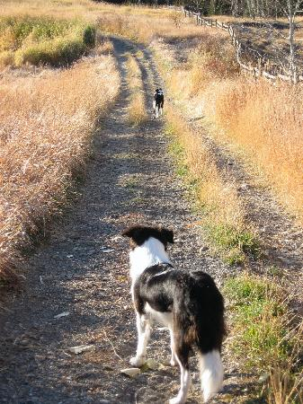 Echo Valley Ranch & Spa : My sidekick while there, Joy