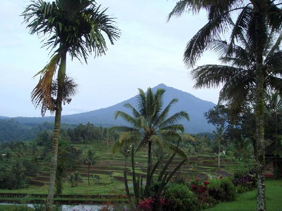 Ijen Resort & Villas : view from resort