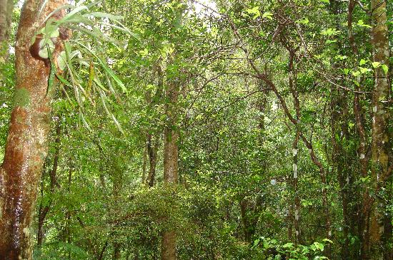 Springbrook Lyrebird Retreat: View from the cabin/veranda - green, green and more green!