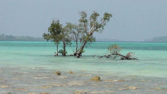 Havelock Island, India: Corals in the foreground