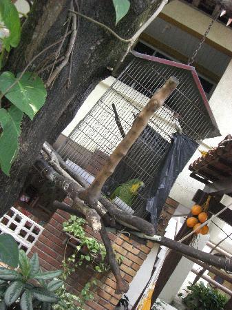 Pousada Casuarinas: il pappagallo