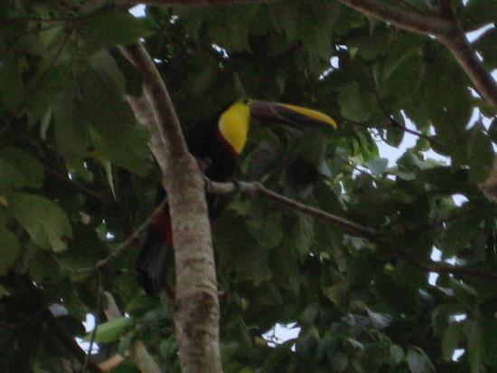 Leaves and Lizards Arenal Volcano Cabin Retreat: Toucan...