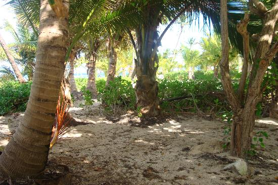 The Palms at Pelican Cove: Through the trees to the water