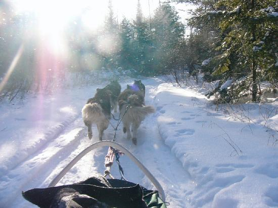 Northern Lights Lodge: dogsled ride