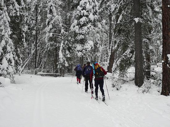 Nipika Mountain Resort: cross country ski through the woods