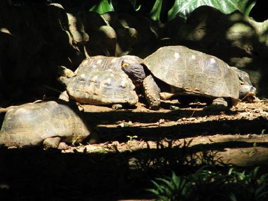 Parc des Mamelles, le Zoo de Guadeloupe: Turtles in Parc des Mamelles