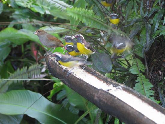 Parc des Mamelles, le Zoo de Guadeloupe: Birds eating sugar in Parc des Mamelles