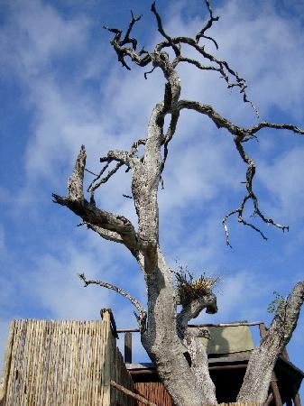 Lion Sands Ivory Lodge: treehouse