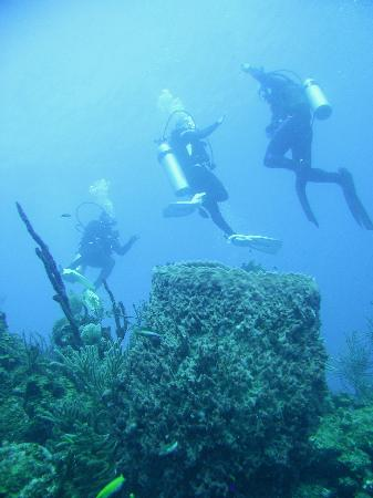 Long Caye Resort: Diving the wall
