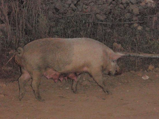 Quinta D'Liz: free pig/barbacoa
