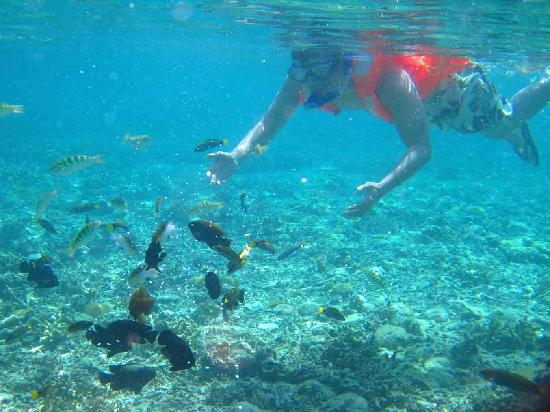 El Nido, Philippines: Fish feeding - truly a delight