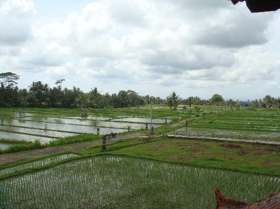 Villa Agung Khalia: Our Bedroom view
