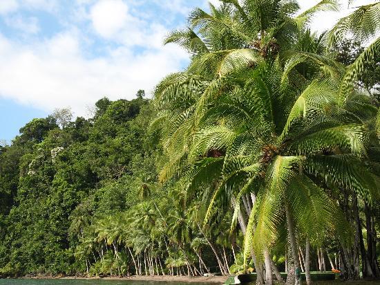 Saladero Eco Lodge: a view down the beach