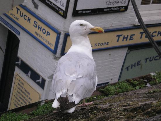 Ship Inn: Seagull outside your window!