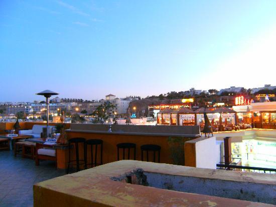 Camel Dive Club & Hotel: camel bar
