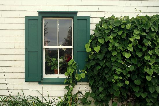 Cavendish, Canada: Window with Vines