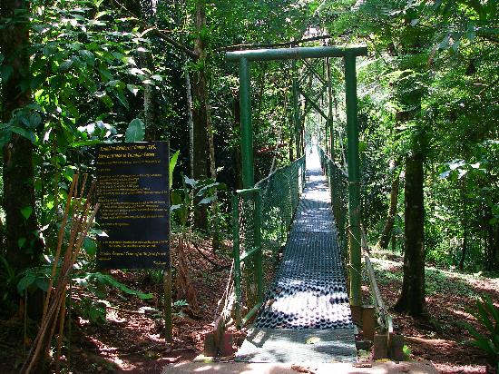 Sarapiquis Rainforest Lodge: Start of Suspended Bridge at Tirimbina