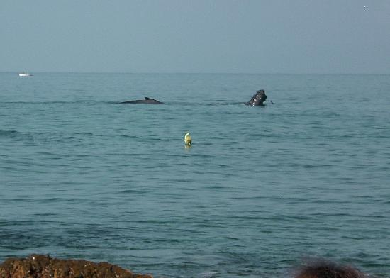 Haleakala Shores Condos: Whales at Kam III beach