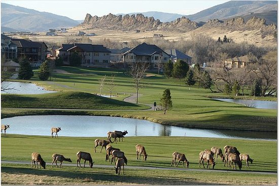 Mariana Butte Golf Course: Elk at Mariana Butte