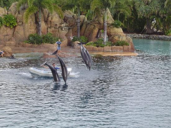 Main Beach, Australia: Dolphins