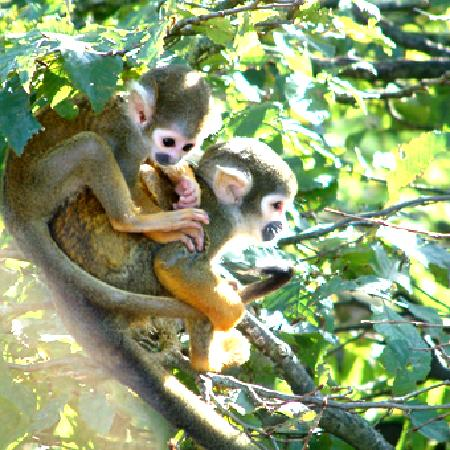 Poitou-Charentes, France : The Valley of the Monkeys