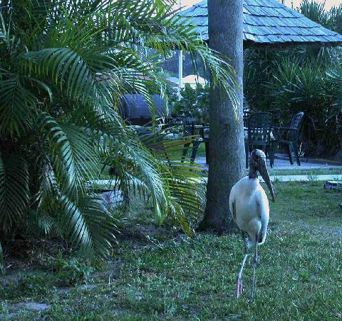 Warm Mineral Springs Motel: Another view of the Wood Crane
