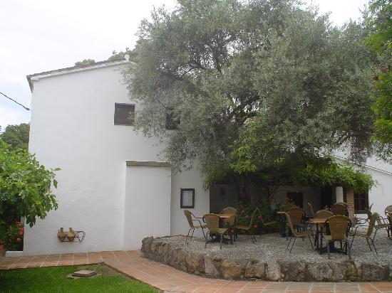 Coín, España: under the olive tree