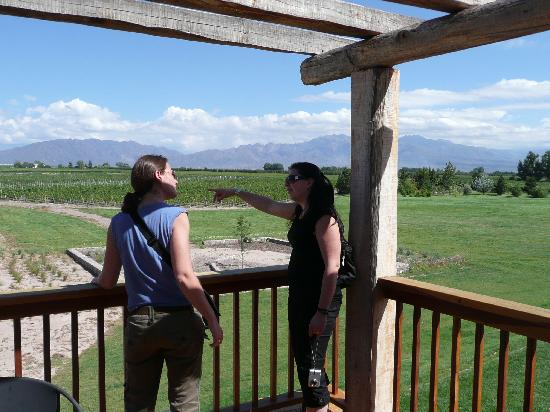 Mendoza Holidays: vineyards and andes mountain