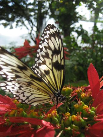 Coconut Creek, FL: schmetterling im butterflyword
