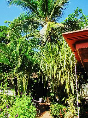 South Beach Hotel: jardin