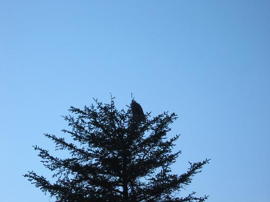Alaska Saltwater Lodge: Eagle right outside our room