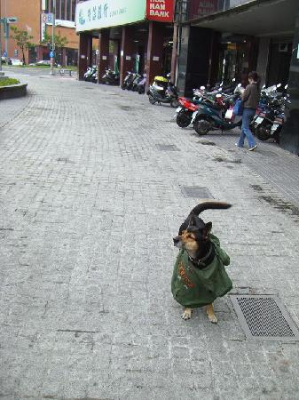 Kaohsiung, Taiwan: Dog in the city