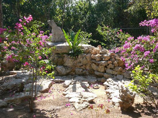Villa Tortugas Residence: giardino tropicale