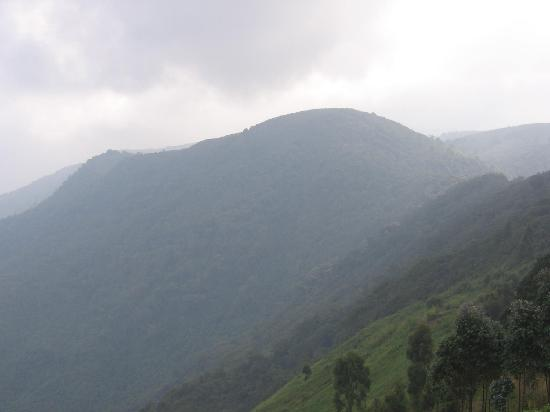 Butembo, جمهورية الكونغو الديمقراطية: Gorillas mountain- Butembo