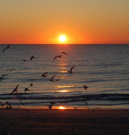 Silver Gull Motel: Atlantic sunrise