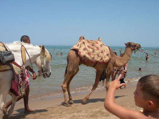 Playa de Saidia - Sus camellos